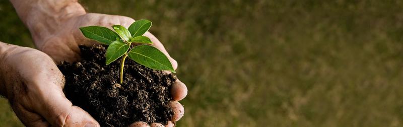 pflanze_in_der Hand_bez